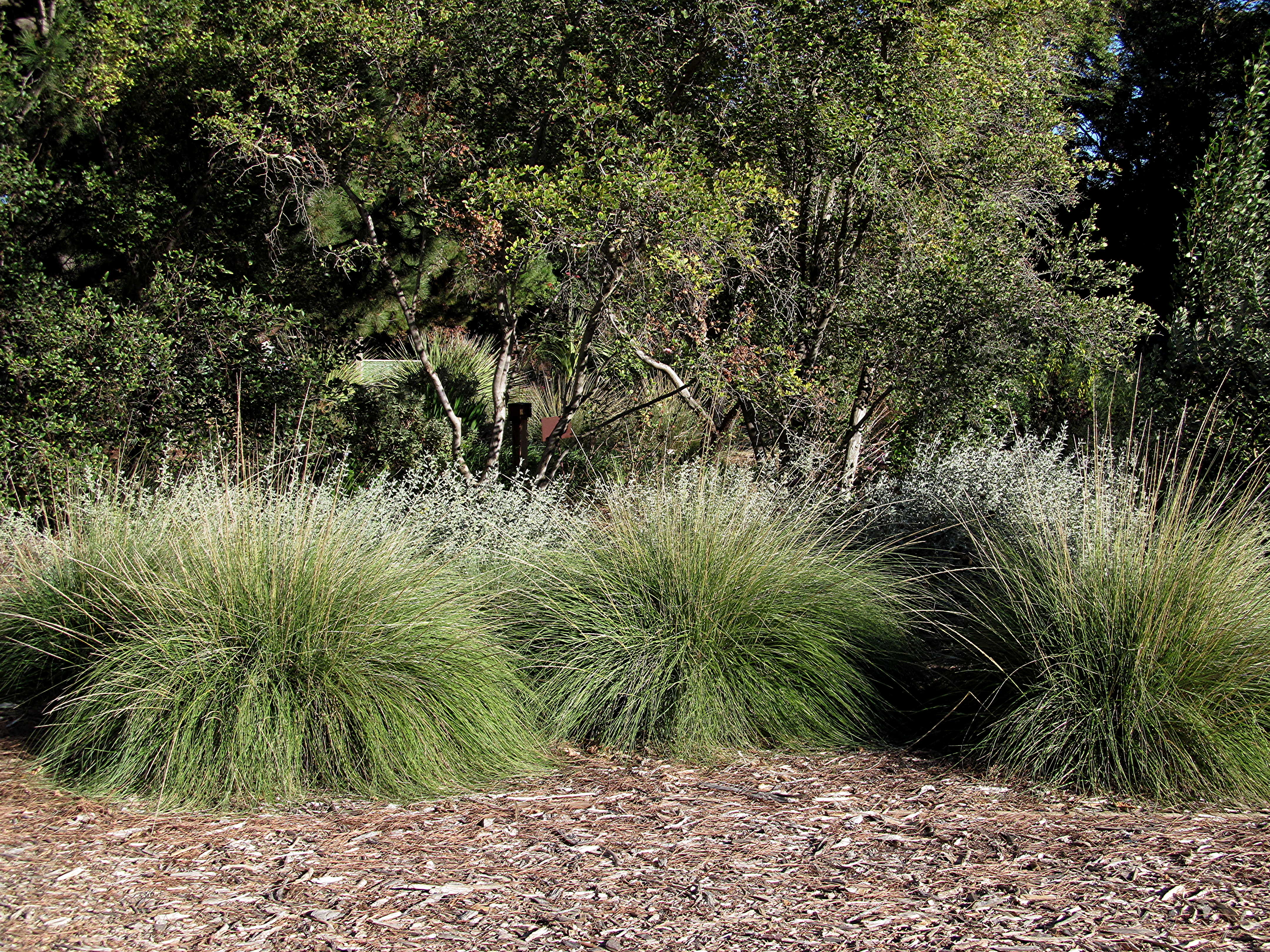 12 tips for low water for Low ornamental grasses