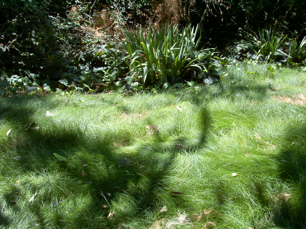 Redwood barn nursery rethinking lawns for Tall ornamental grasses for shaded areas