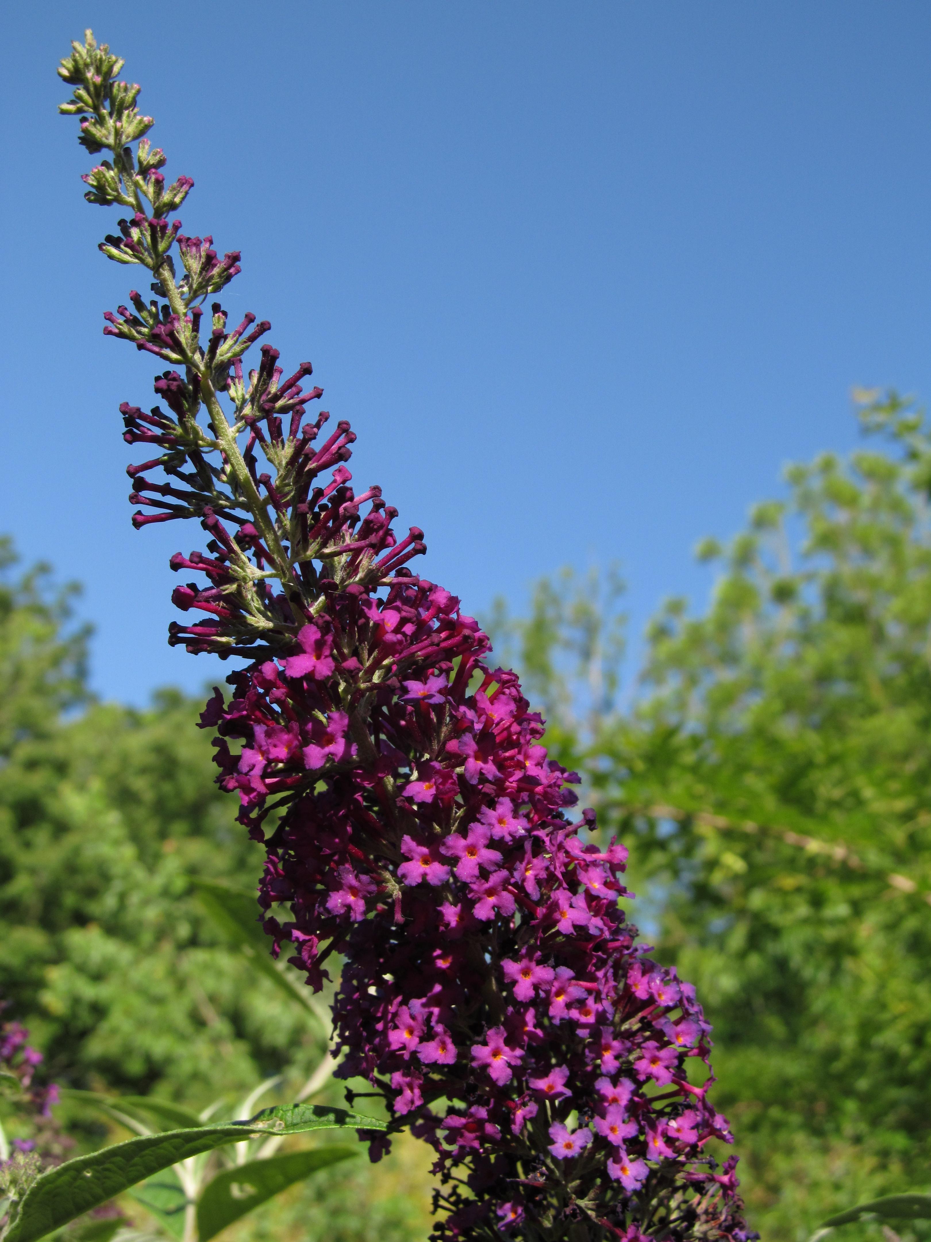 Redwood Barn Nursery Ten Plants for Early Summer