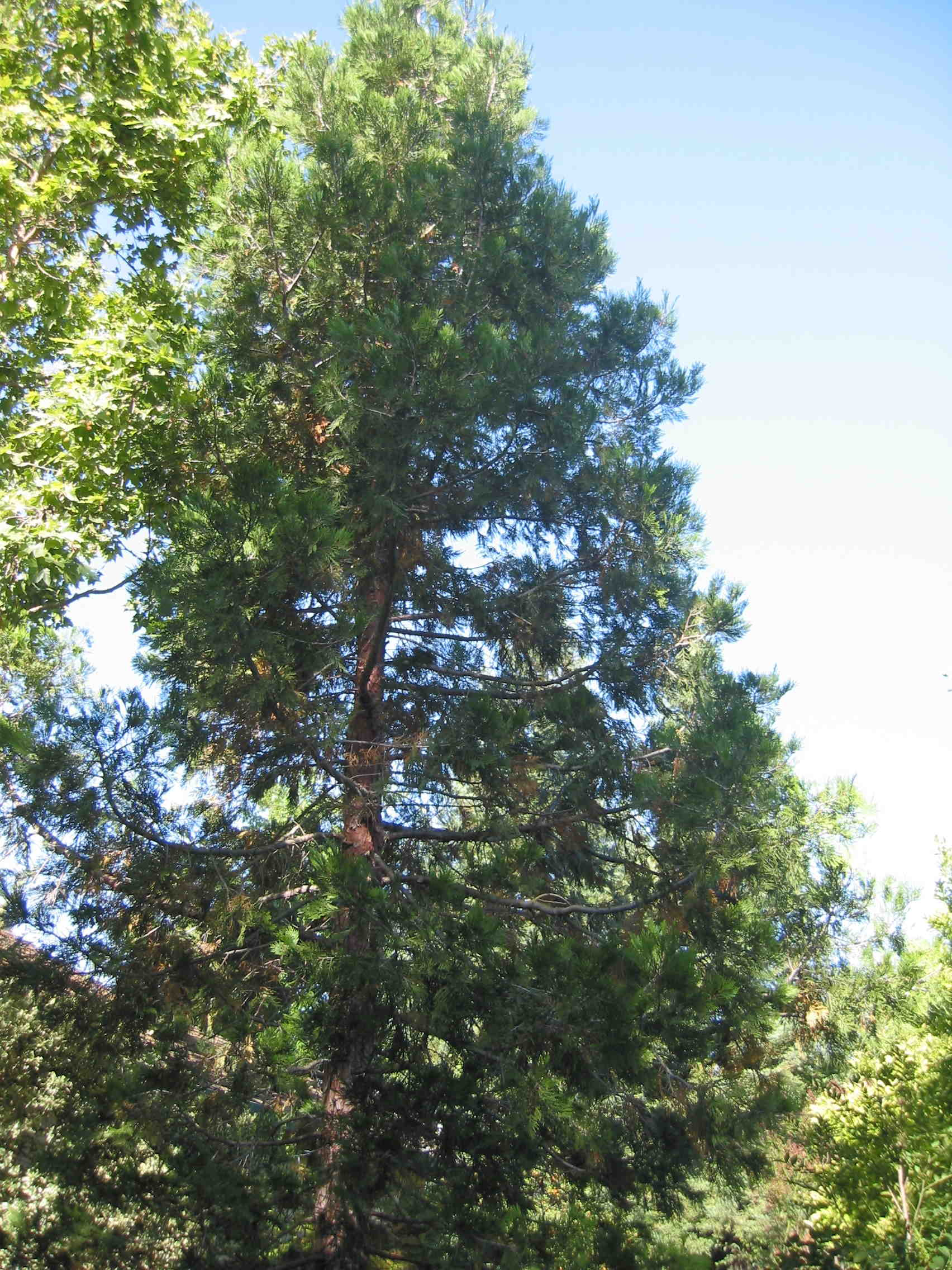 trees for reduced water use