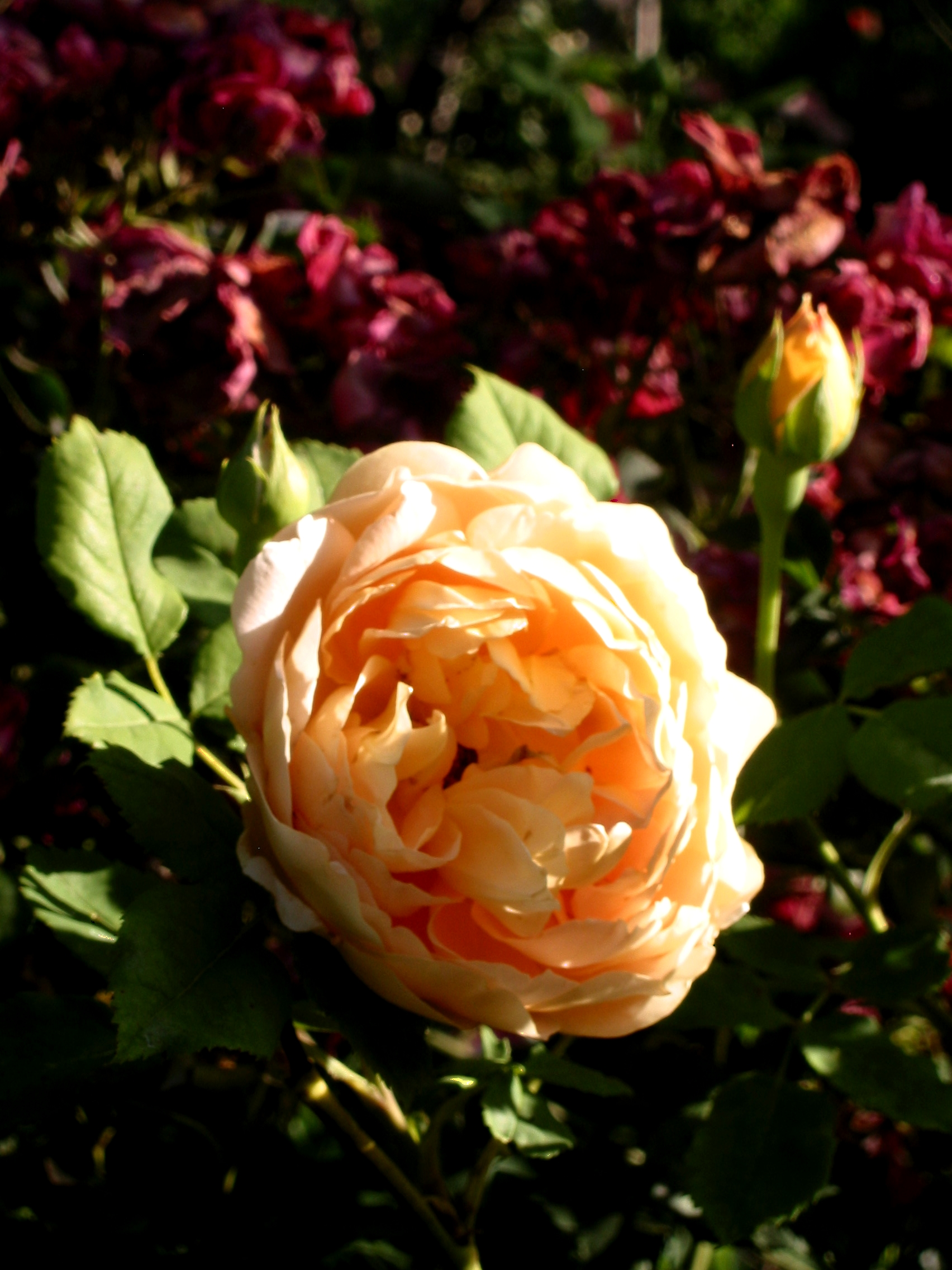 Funny home ownership pictures of roses.